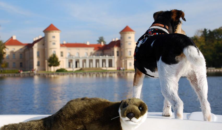 Best Western Plus Hotel Marina Wolfsbruch Schloss Rheinsberg und Hund Skippy